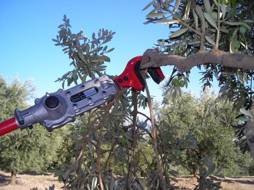 Emr400 Olive Harvester   Kadioglu Machinery